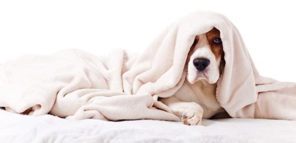 Erholsamer Schlaf für den Hund: Die besten Tipps zum Thema Hundebetten