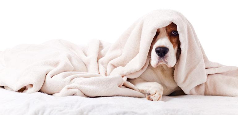 erholsamer schlaf f r den hund die besten tipps zum thema. Black Bedroom Furniture Sets. Home Design Ideas